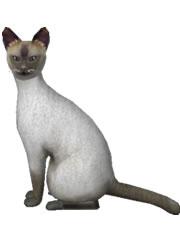 猫シャム猫 無料イラスト素材ダウンロード